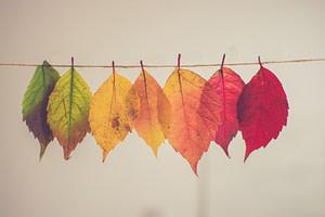 assorted-color leaf hanging decor