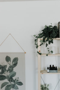 green plants on white wooden shelf