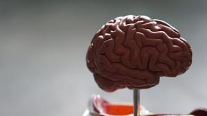 brown brain