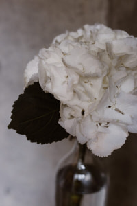 close up photo of white flower
