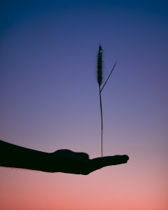 silhouette photography of person holding plant