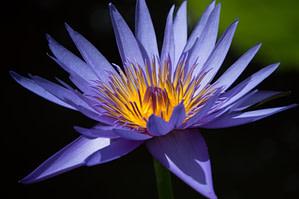purple ad yellow flower