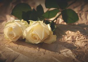 closeup photo of white roses